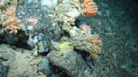 Coral on the slope of a seamount