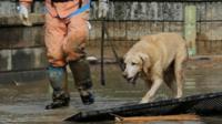 A rescue dog