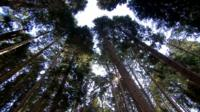 Trees at Bedgebury Pinetum