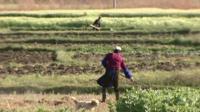 Farm workers in field