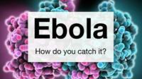 Ebola graphic