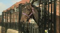 Horse in front garden