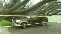 A tree hits a car