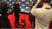 Lewis Hamilton and his dog Roscoe on the red carpet