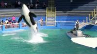 Lolita the killer whale