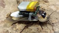 A cyborg cockroach