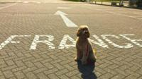 Miss Darcy the dog on her way to France