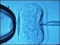 Embryo (generic)