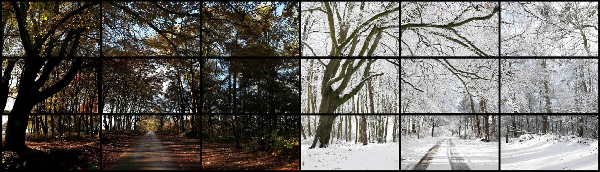 Nov. 7th, Nov. 26th 2010, Woldgate Woods, 11.30 am and 9.30 am by David Hockney