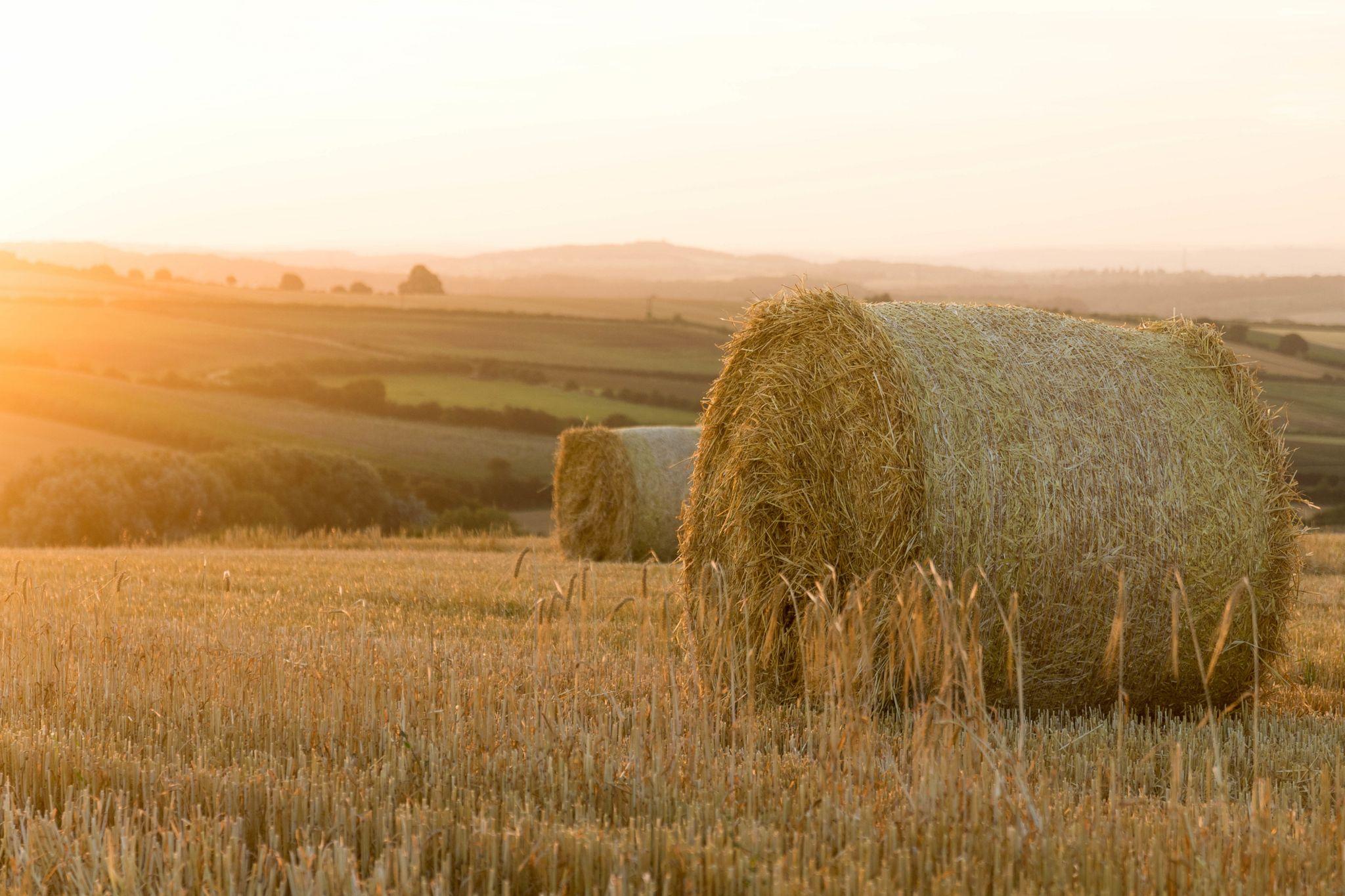 Hay field at dawn