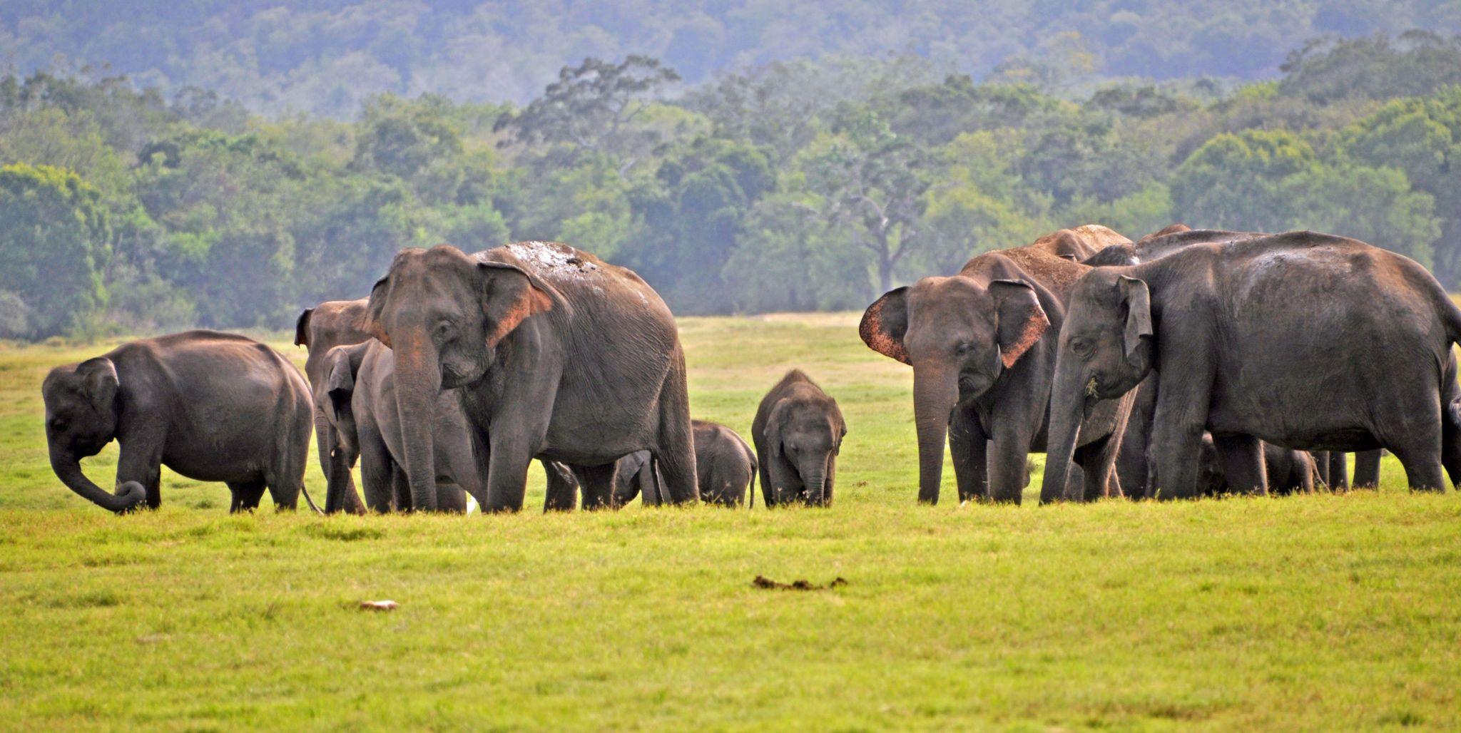 Kaudulla National Park in central Sri Lanka, August 2019.