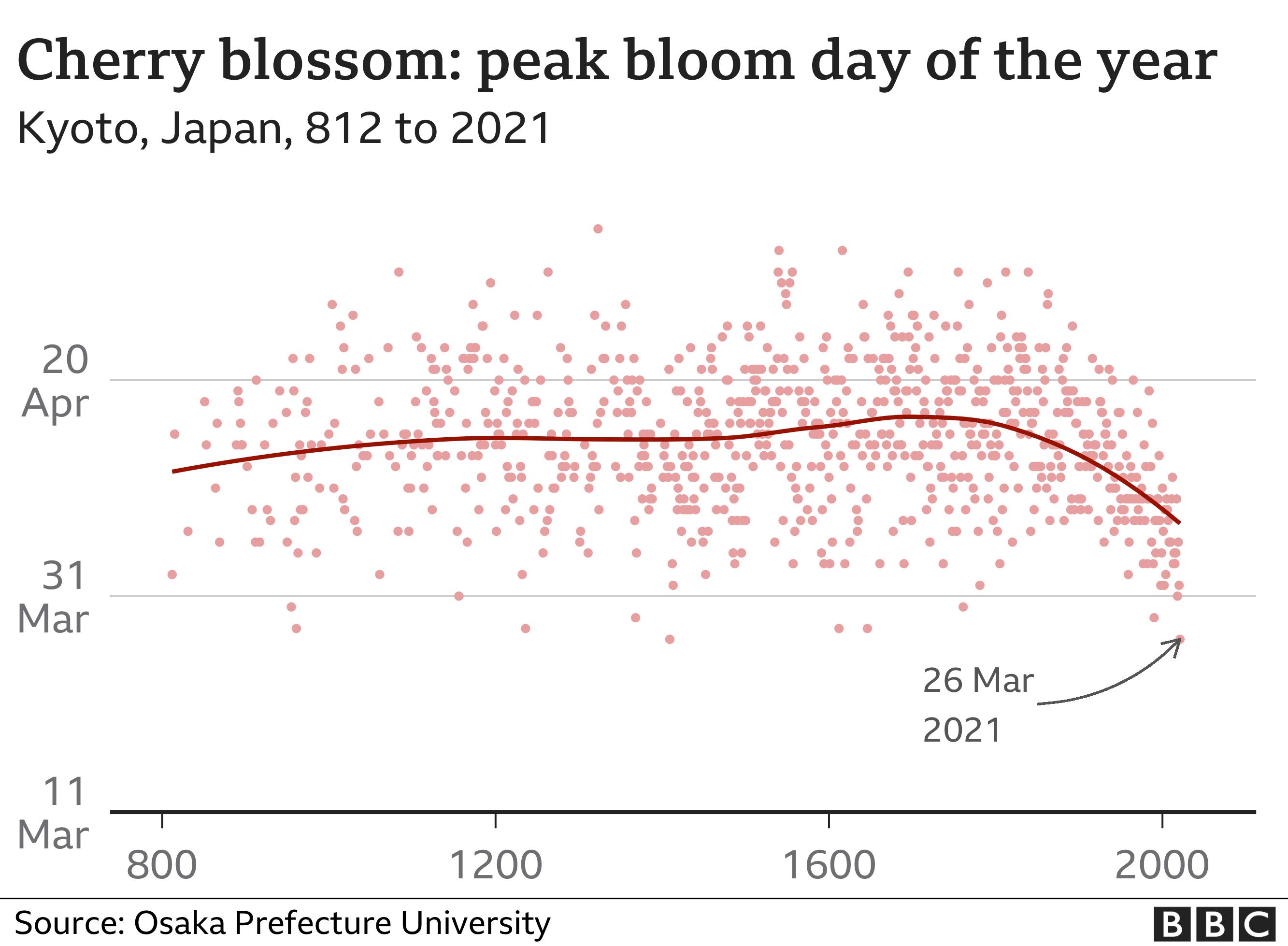 Japan's cherry blossom 'earliest peak since 812' thumbnail