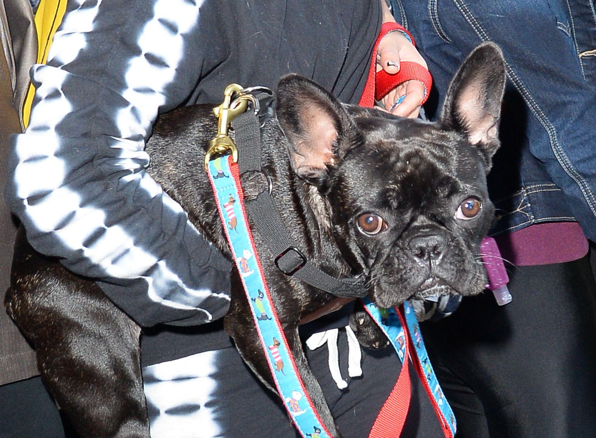 Lady Gaga's dog Miss Asia