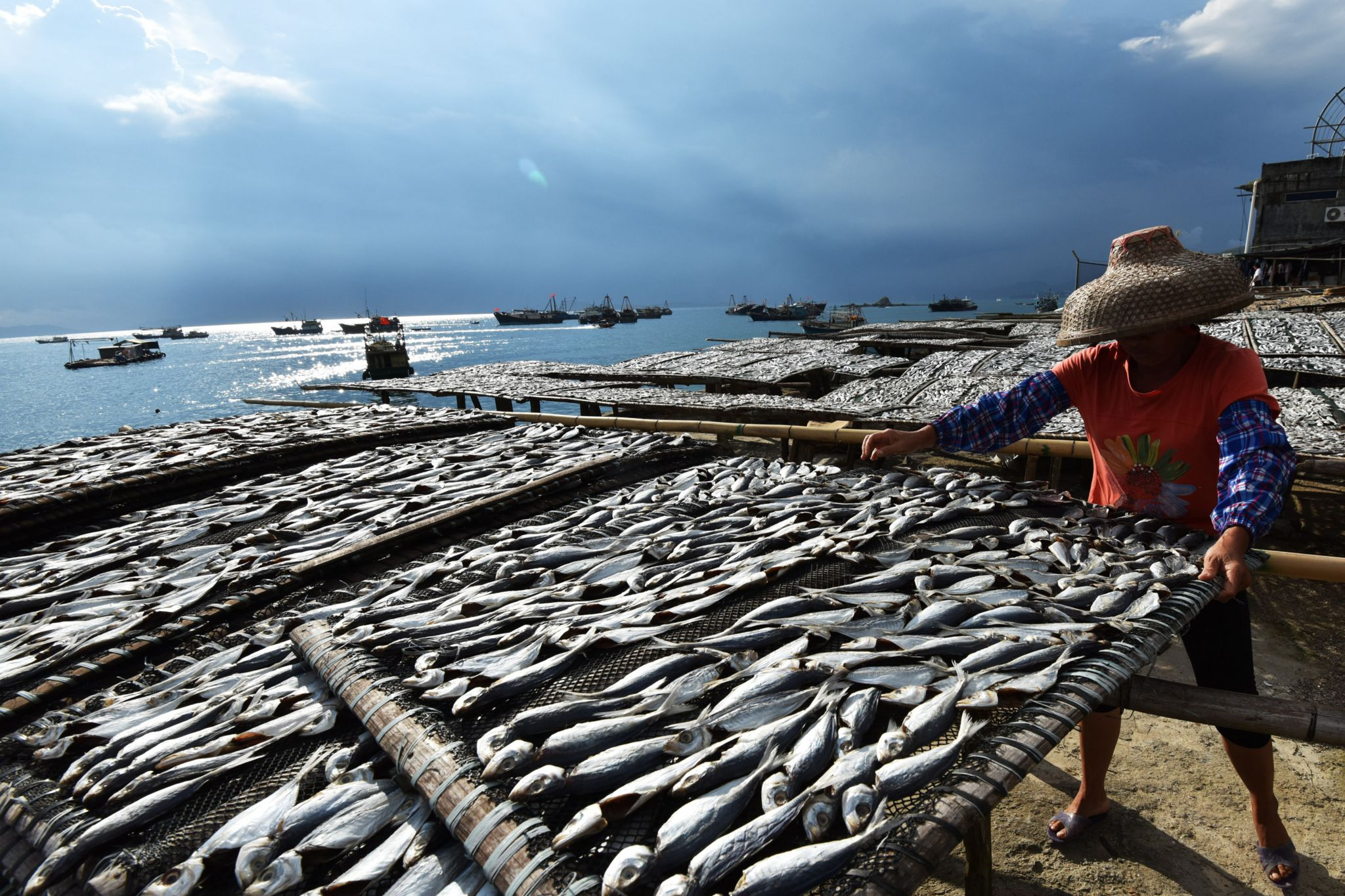 A woman drying fish in the sun in Shenzhen, China's southern Guangdong province. (September 9, 2017)