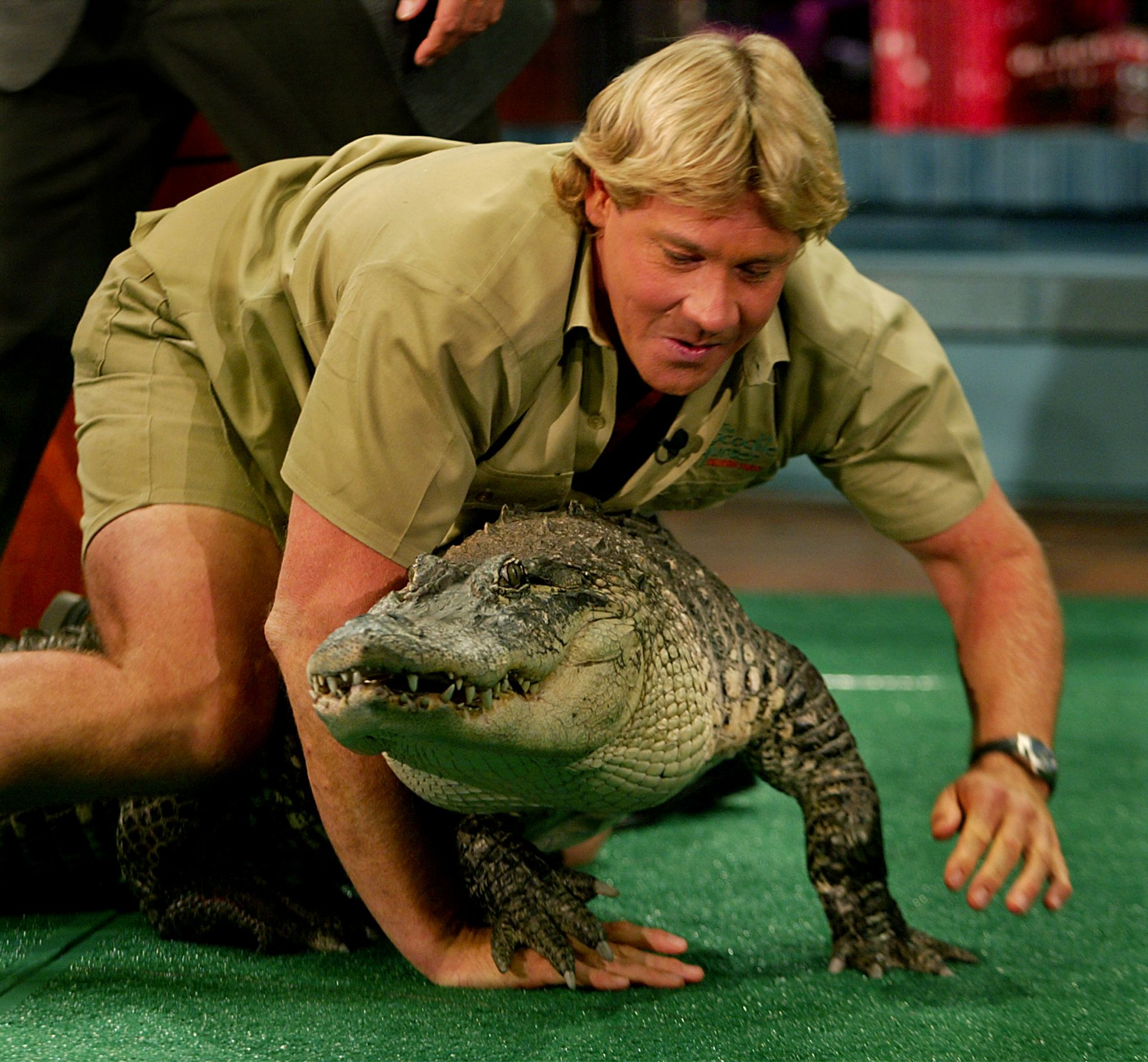 Steve Irwin crawling with a crocodile