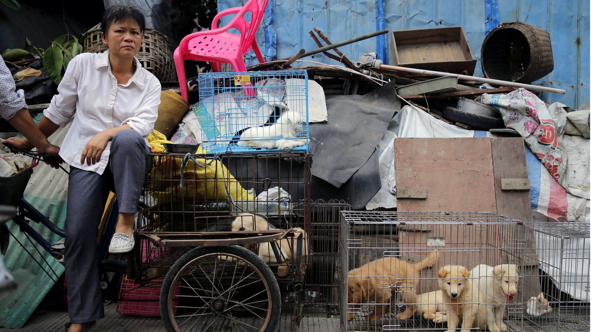"""A vendor waits for buyers beside dogs for sale at a market in Yulin city, southern China""""s Guangxi province, 20 June 2016."""
