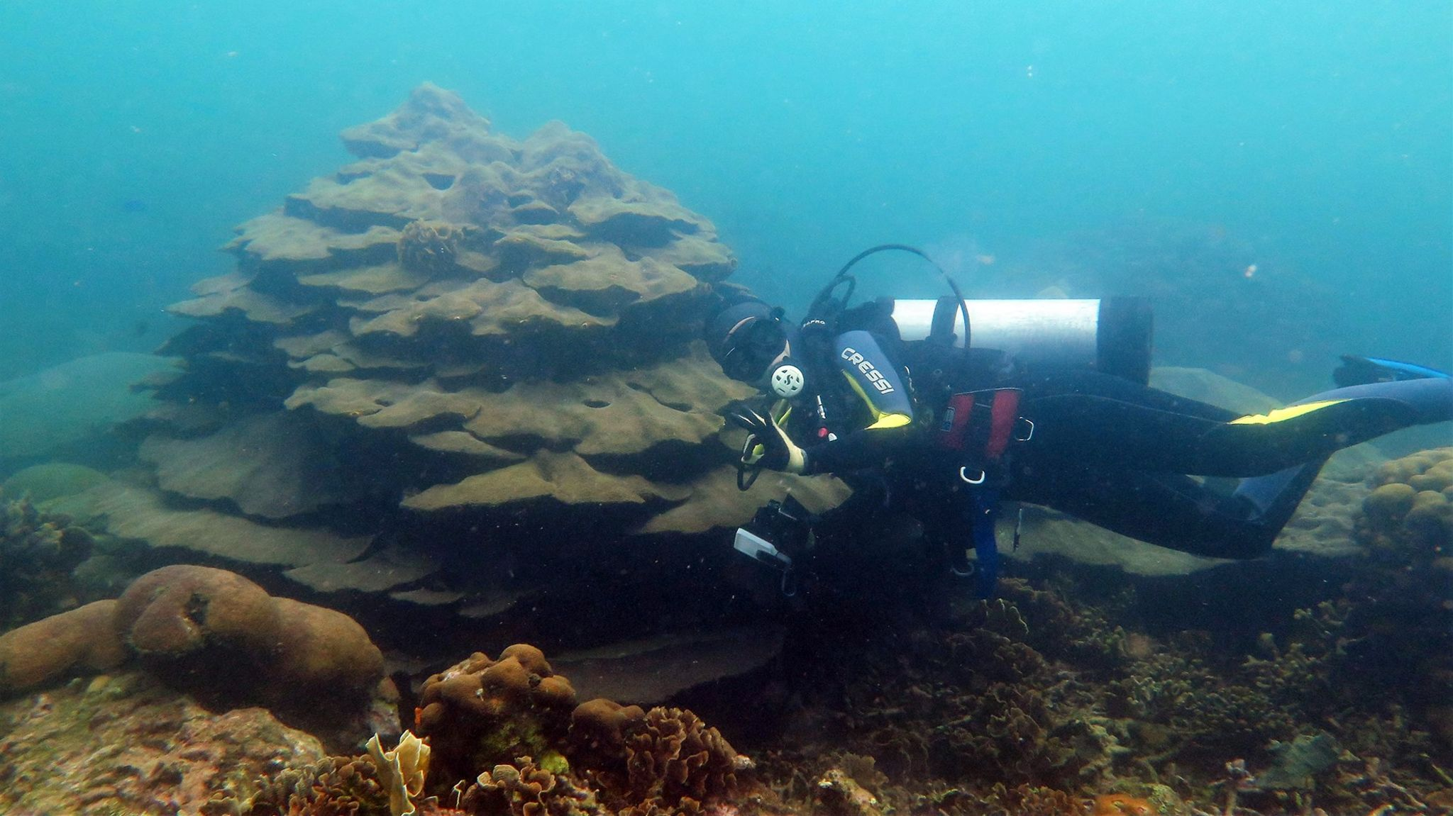 Valeria Pizarro diving down to the Varadero reef