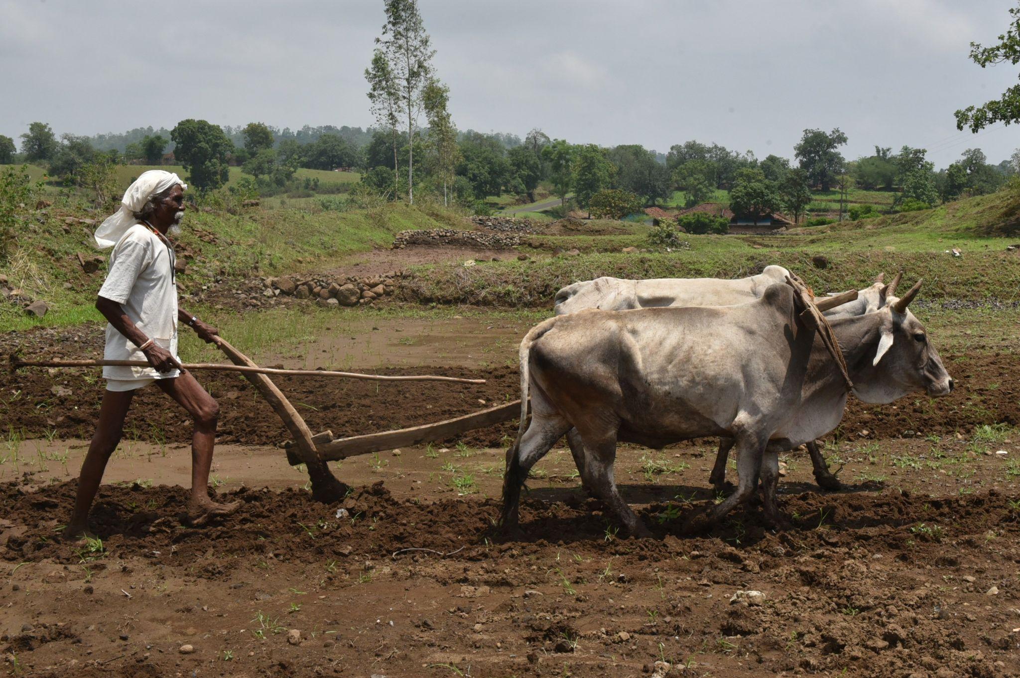 Farmer ploughing field near Jabalpur, India