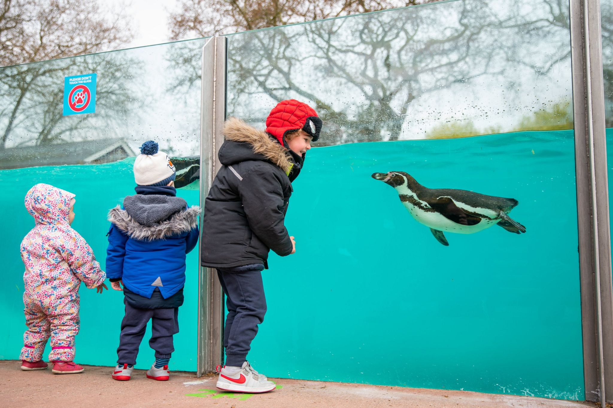 Children visit the penguins at London Zoo, which was allowed to reopen this week