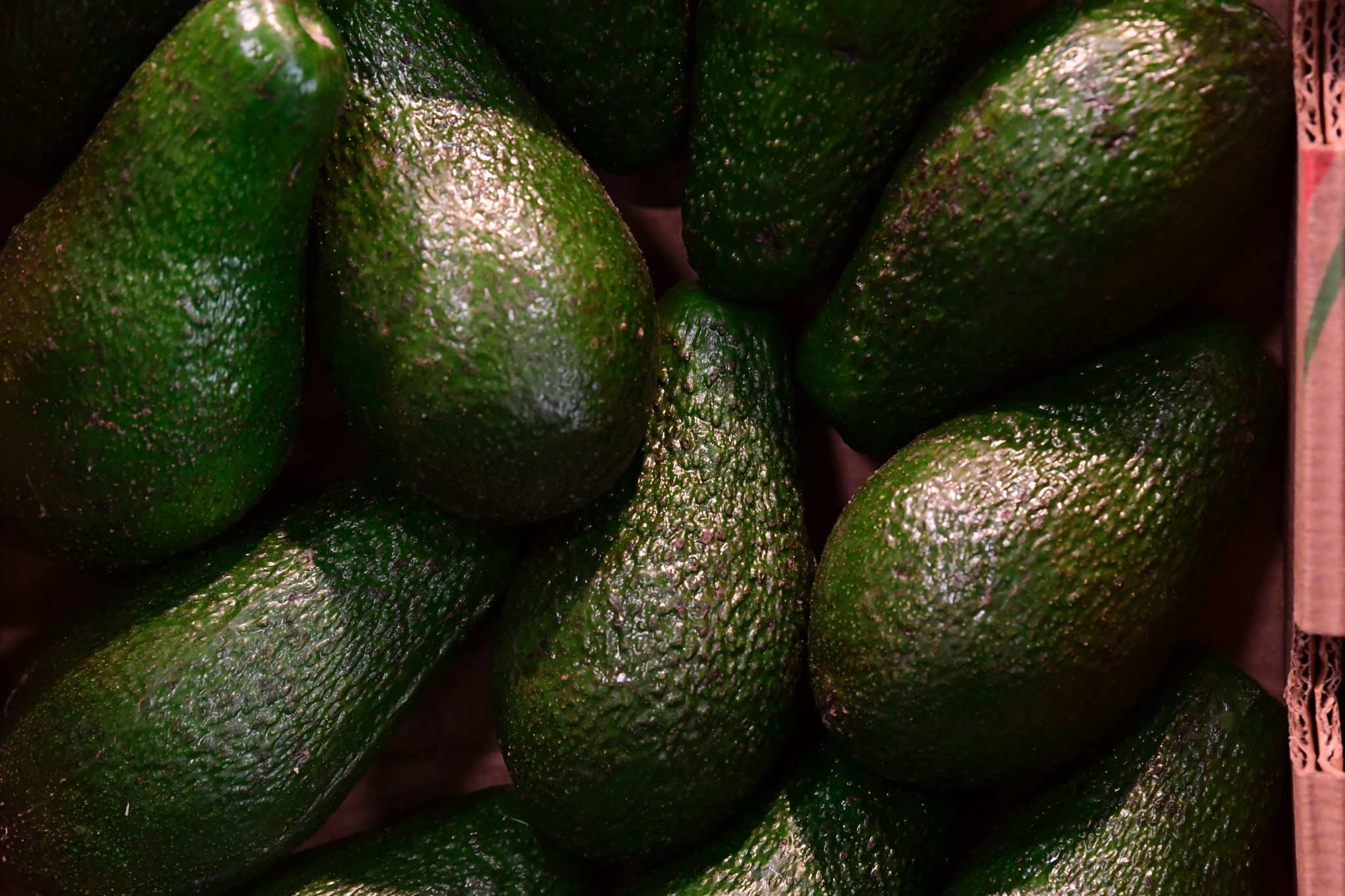 Avocados at market