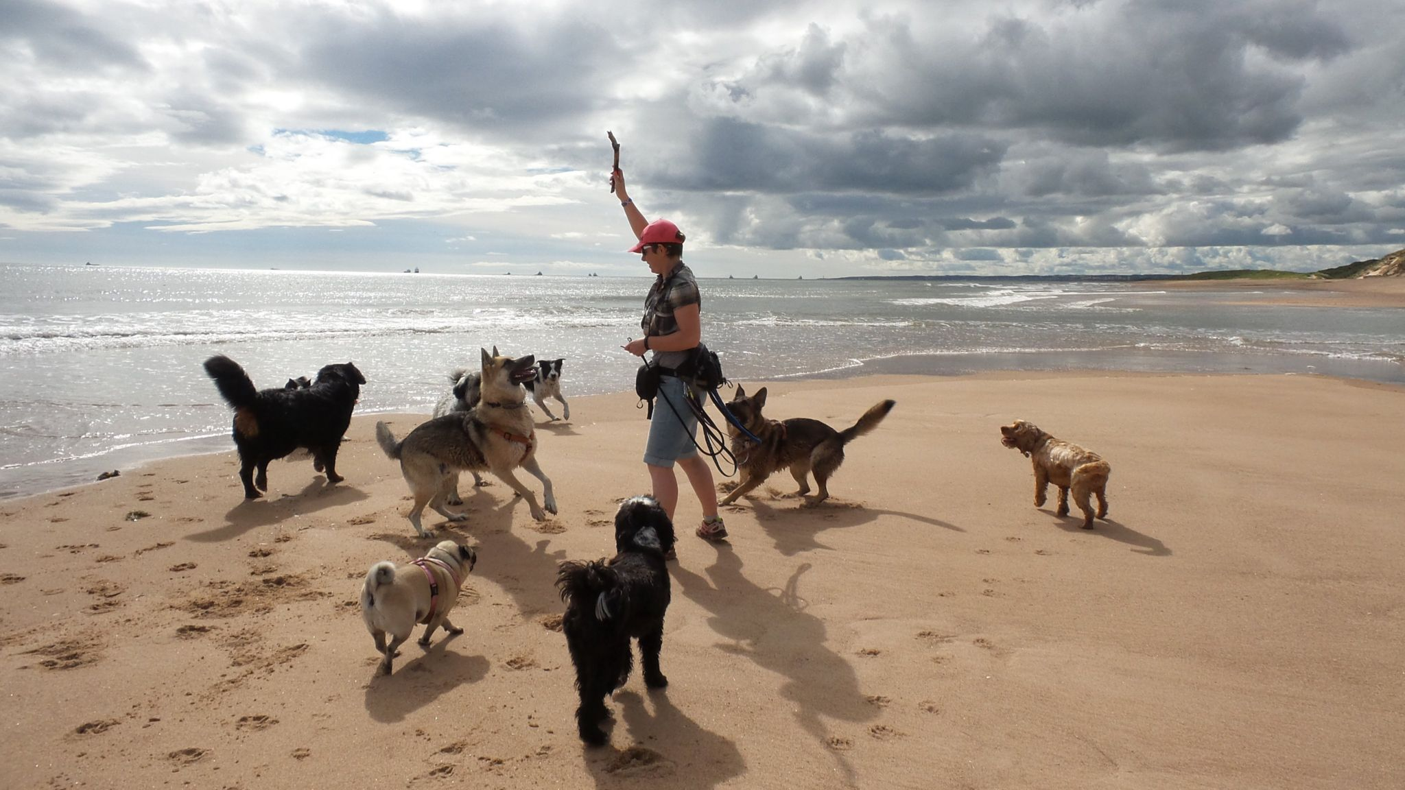 My name is Abi Will and I am a dog walker, this picture was taken on one of our trips to Balmedie Beach. It's a rare treat for the dogs and they love it