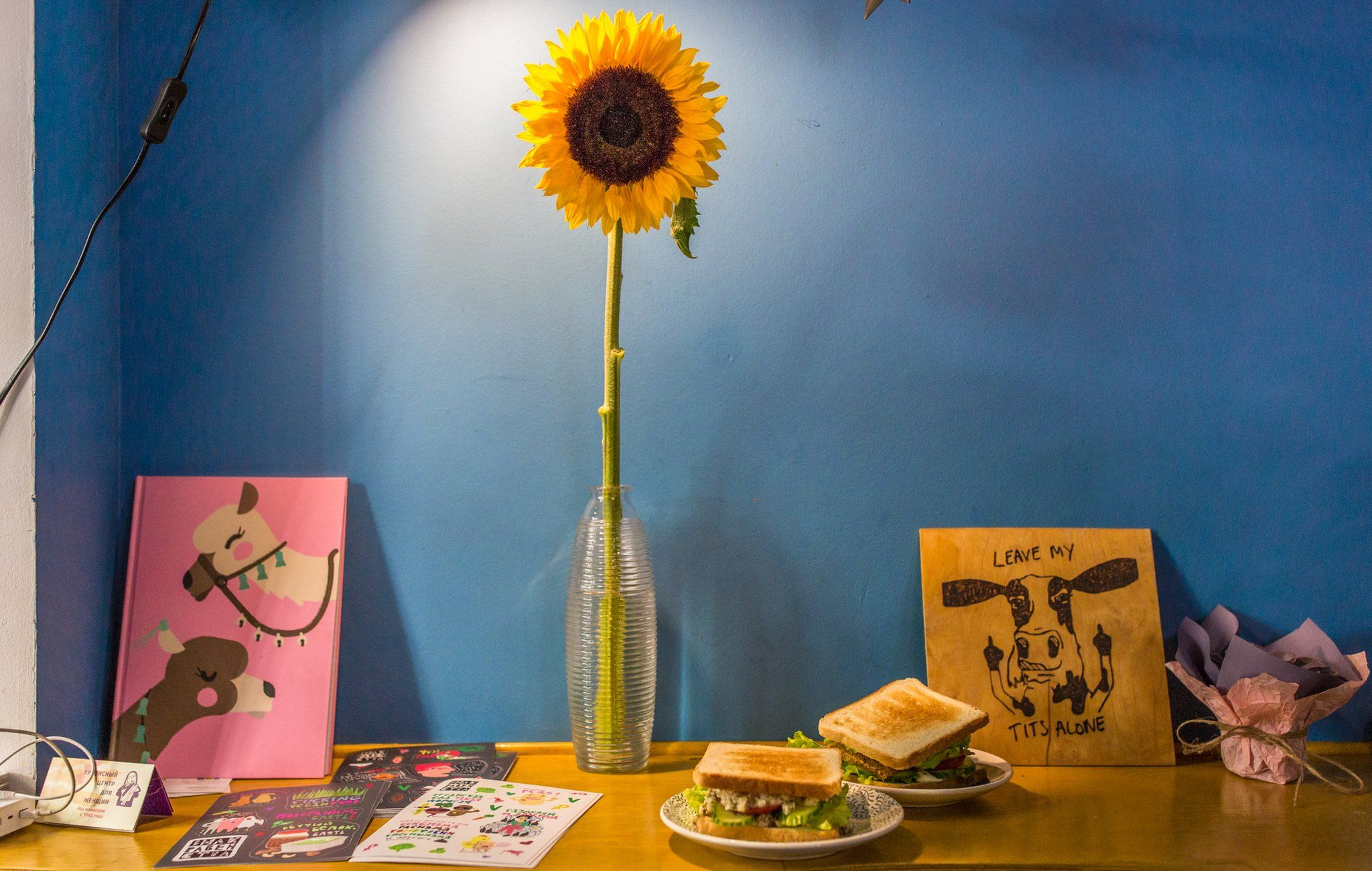 A drawing of a cow flipping off visitors with the message 'leave my tits alone', next to a sunflower in a vase on a table against a blue wall