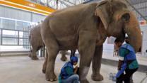 bbc.co.uk - India's first elephant hospital