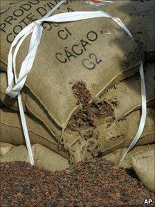 Cocoa beans spill from a torn jute bag