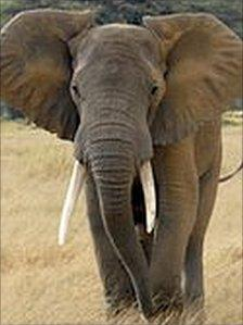 An elephant pictured in Kenya in 2007