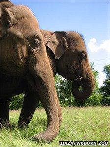 Elephant at Woburn Zoo