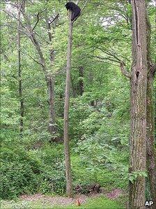 Jack the cat traps black bear up a tree in New Jersey in 2006
