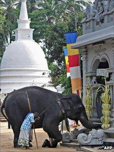 Elephant at temple