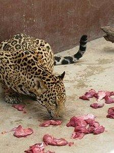 Feeding time at the zoo in Havana