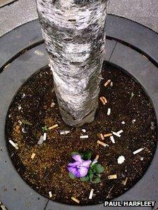 'Batty Boy' planted in Exchange Square in Manchester