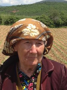 Bulgaria tobacco planter