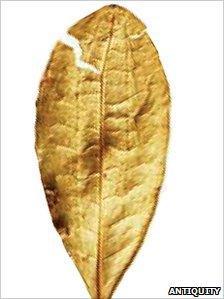Modern coca leaf