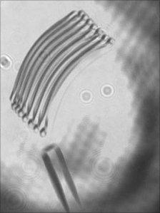 Image of lightfoil movement (Nature Photonics)