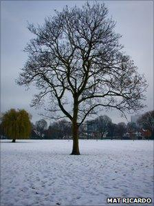 A tree in Wandle Park in the snow