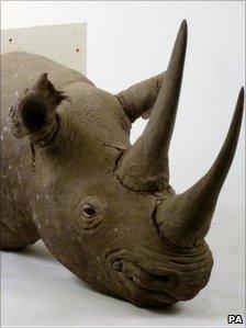 The stolen stuffed rhino head stolen from Sworders Auctioneers