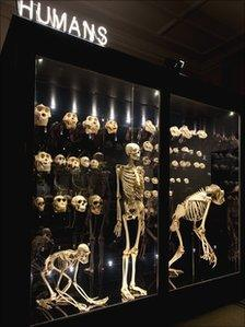 Humans display at Manchester Museum