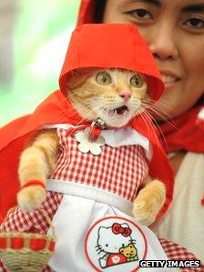 Cat in red riding hood outfit