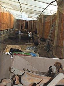 Bones unearthed at Bath Abbey