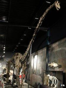 Dinosaur skeleton sold at auction in West Sussex