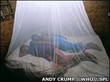 Sleeping under mosquito net