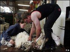 A sheep shearer (generic)