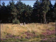 Bagmoor Common