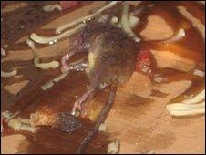 This dead mouse was found in the Birmingham shop