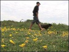 Dog walker on Braunton Burrows