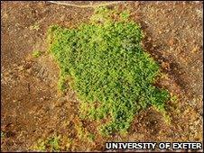 Degraded forest island (image: University of Exeter)