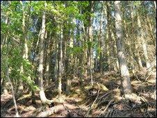 Woodland near Boot where Bird's body was found